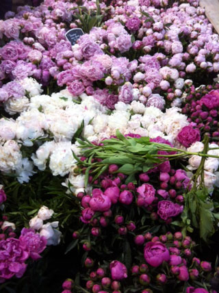 peonies-paris_web